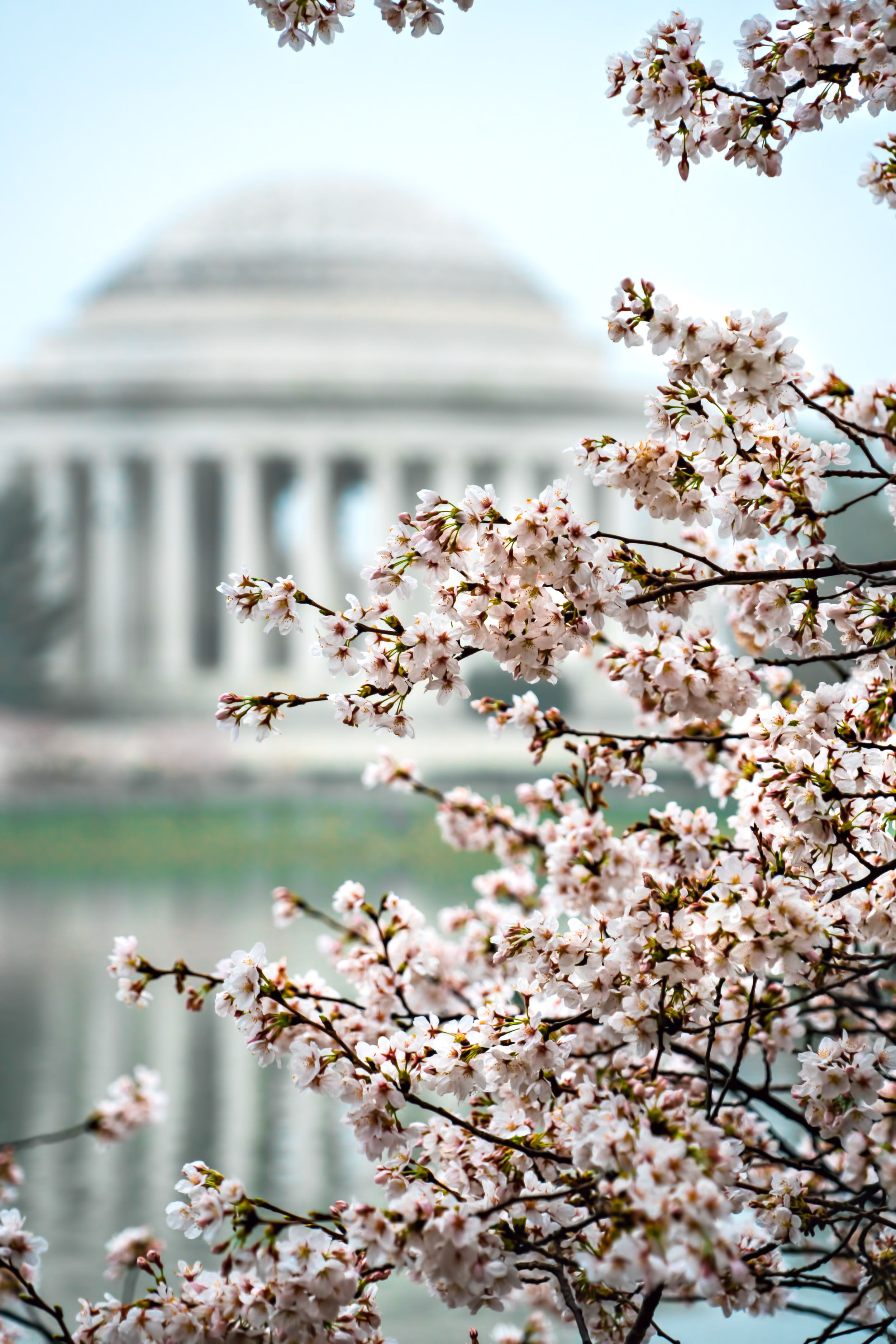 I really love this shot of the Cherry blossoms with the Jefferson Memorial compressed in the background and the only way to accomplish that was to step back and zoom in. #Sony A7RM2, F/6.3, 1/100th, ISO 400.