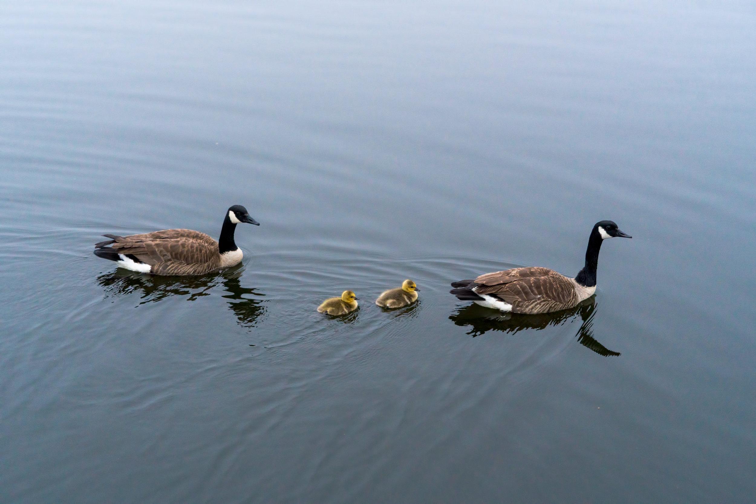 Burke Lake Park - Family day at the lake
