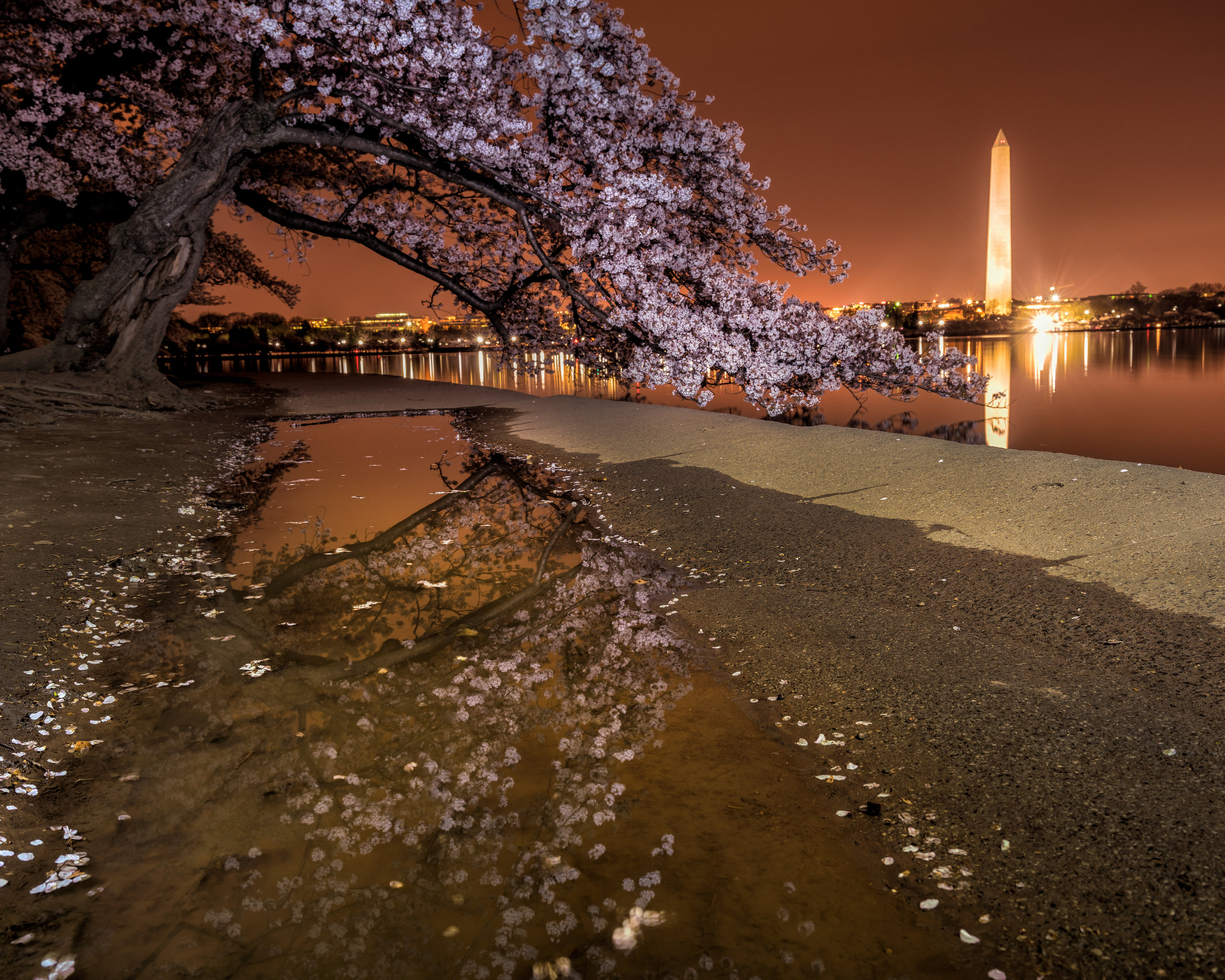 Cherry blossom season is always a popular time on the Tidal Basin ---- Sony A7R3 --- 5:38am -- Sony 16-35/24mm, 30sec Exposure, F/7.1, ISO 100, Tripod
