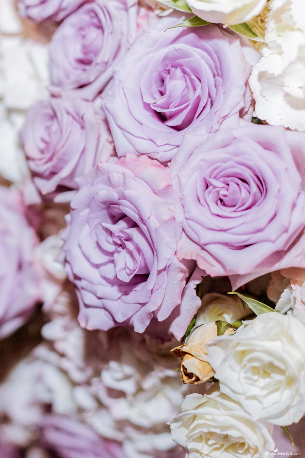 Purple Roses Toronto Florist by EvaImage Photography.jpg