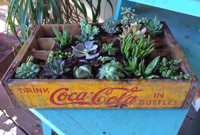 Coca Cola Succulent Planter.jpg