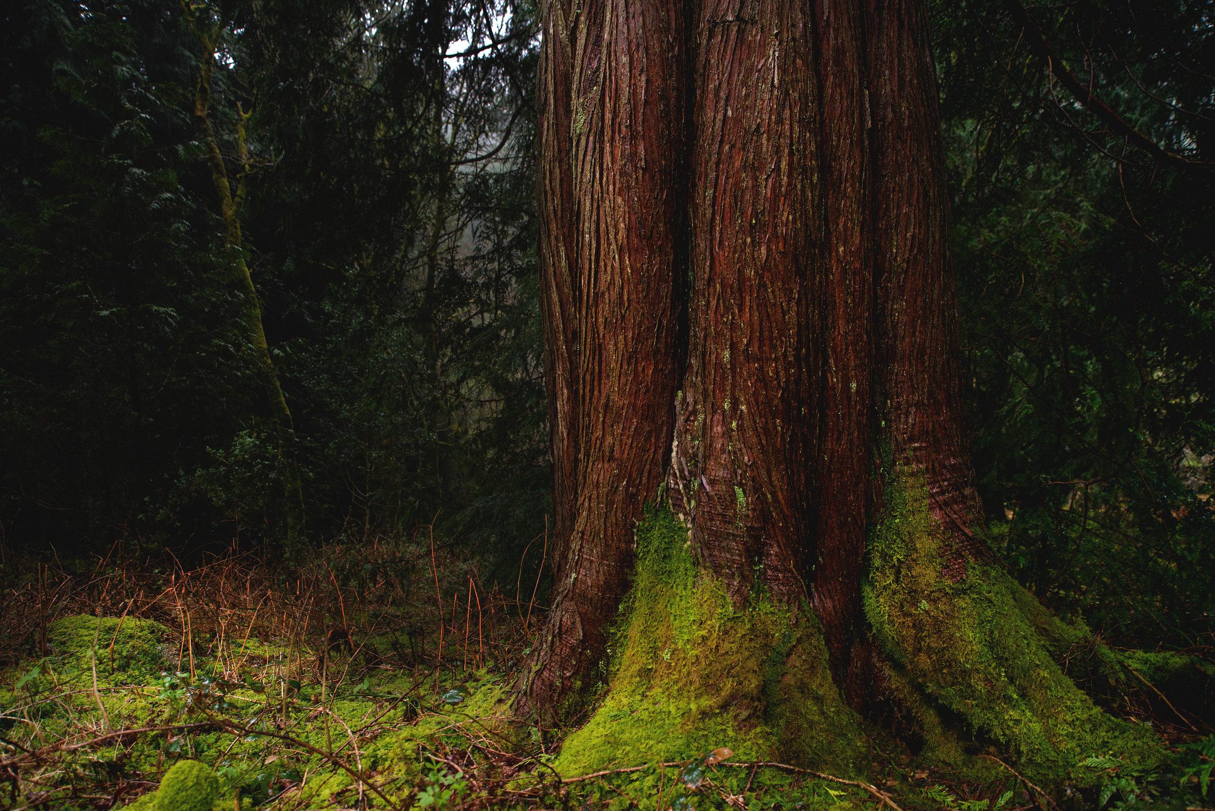 LowRes_HeartwoodSaunas-26.jpg