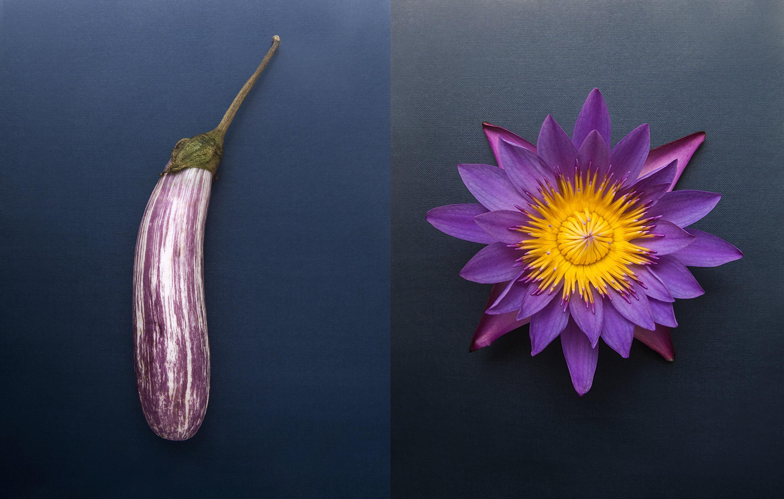aubergine_lotus.jpg