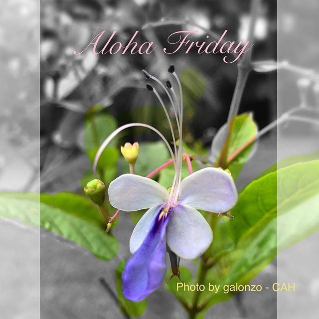 Aloha Friday Friends! #CAH #luckywelivehawaii #concierge #conciergelife #livingaloha #conciergehawaii #Hawaiianhospitality