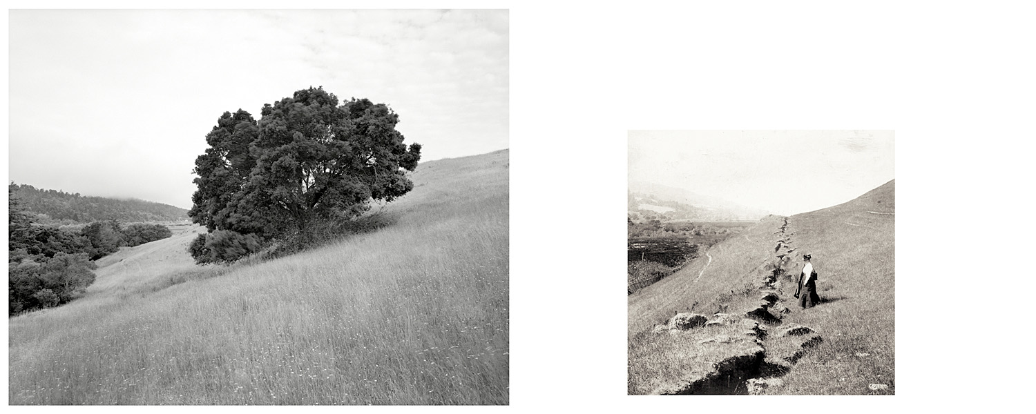 LEFT: Oak tree in covered fault line, Point Reyes National Seashore, 2003   RIGHT: Fault trace 2 miles north of the Skinner Ranch at Olema, view is north, 1906