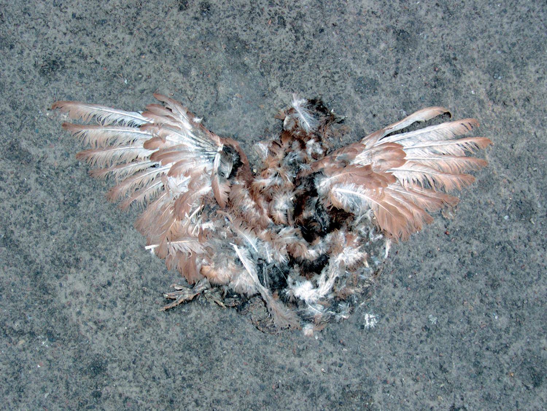 07_07_03Dead pigeon.jpg