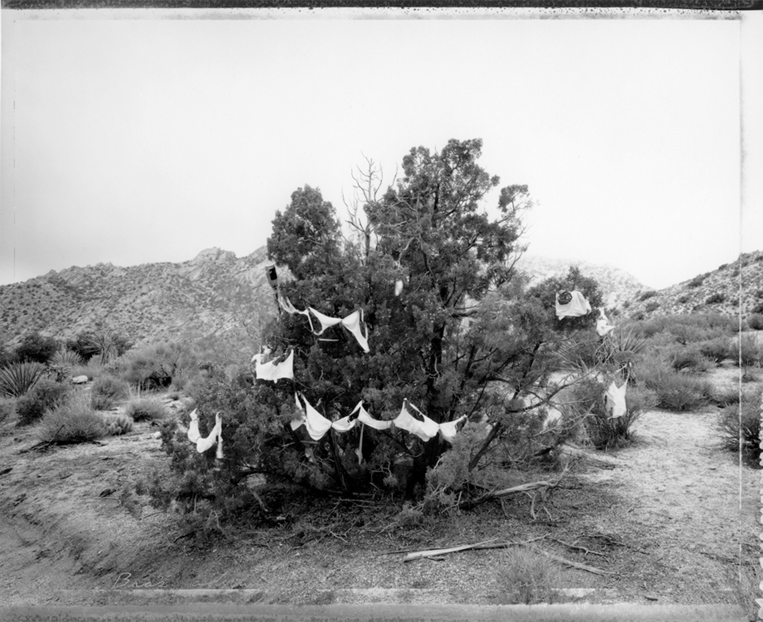 Bras decorating a juniper, Christmas Tree Pass, 1987