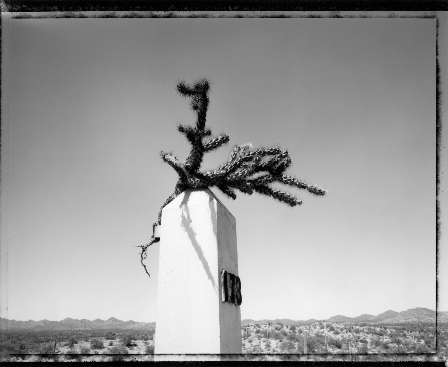 Cactus placed on International Boundary Marker, 1993
