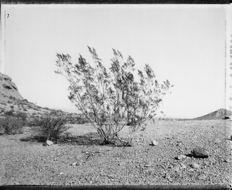 Man behind Creosote bush, Phoenix, AZ, 1982