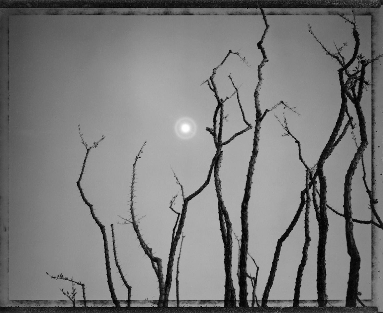 Ocotillo in moonlight, along the Camino del Diablo, 1993