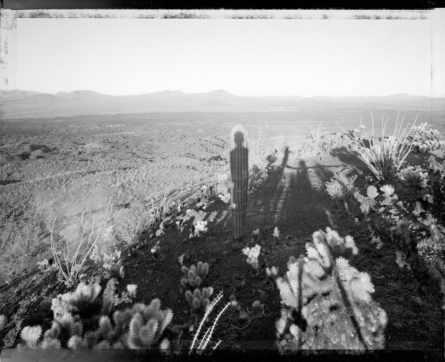 Self portrait with saguaro about my same age, Sonora Mexico