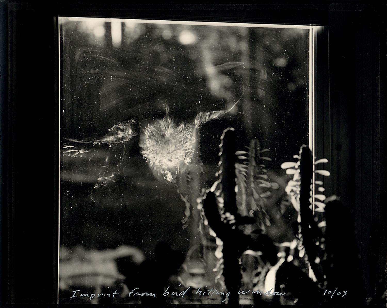 Imprint from bird hitting window, 2003