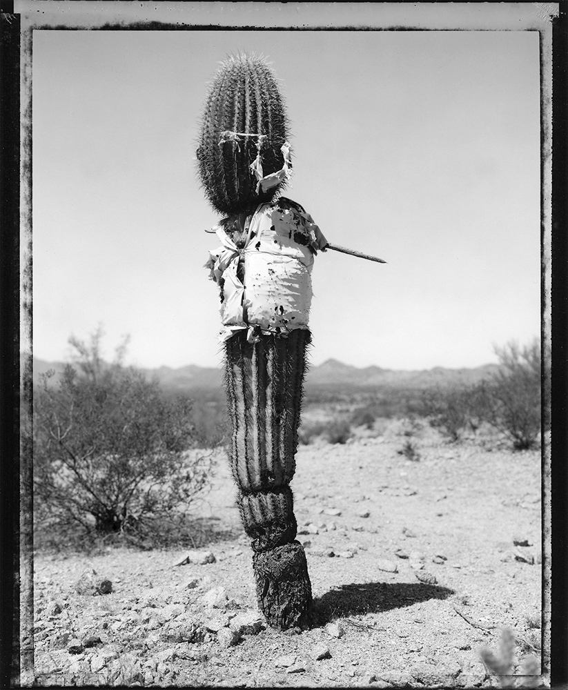 Saguaro with shirt at the US - Mexico border, 1993