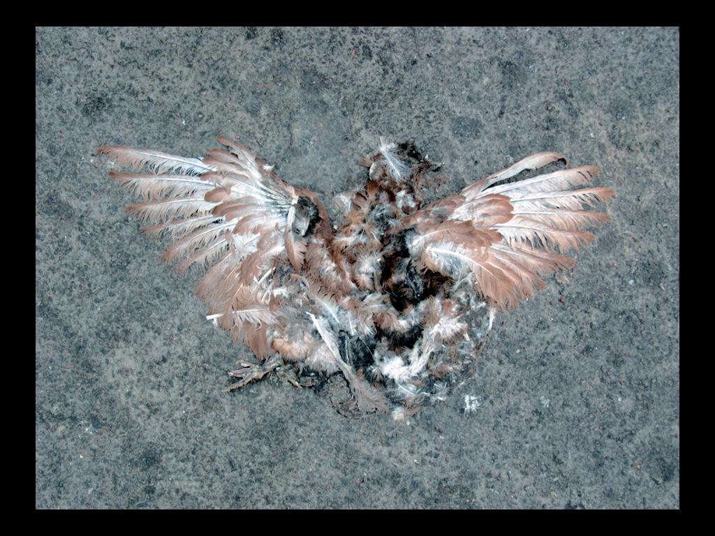 Bird hit by car