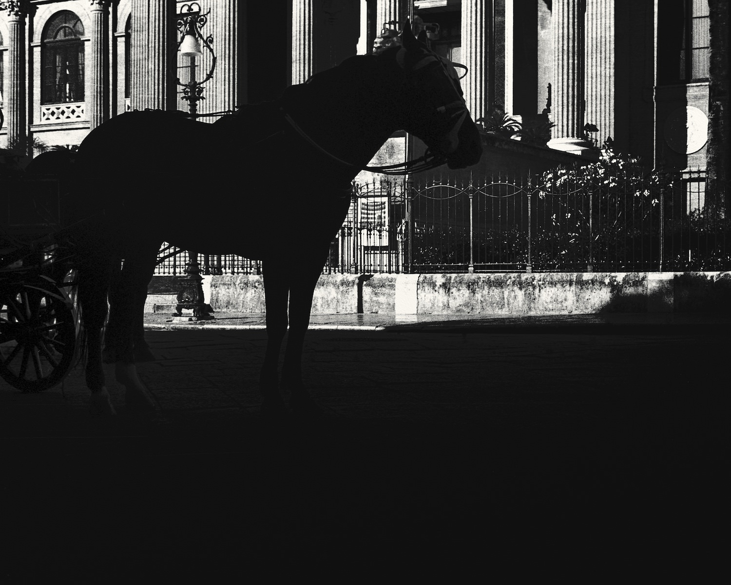 palermo_horse_by_philip sweeck.jpg