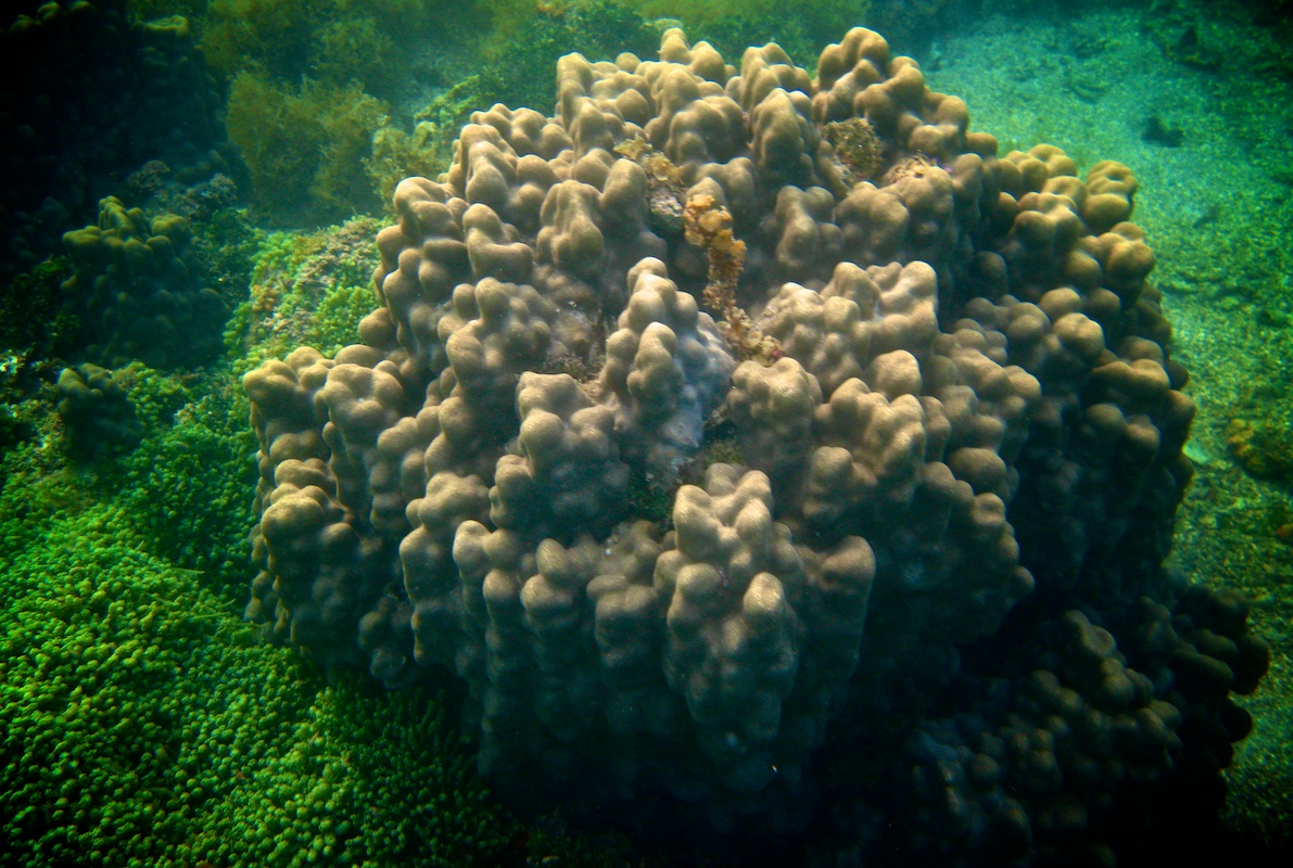 Bleached coral castles in the Gulf of Mannar | Rameshwaram Island | Tamil Nadu | India