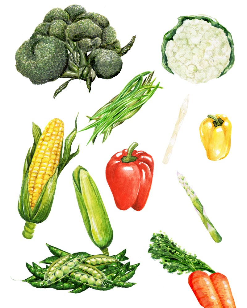 Japanese Supermarket Organic Packaging & Various Commissioned Food Illustration   (Click to see more)