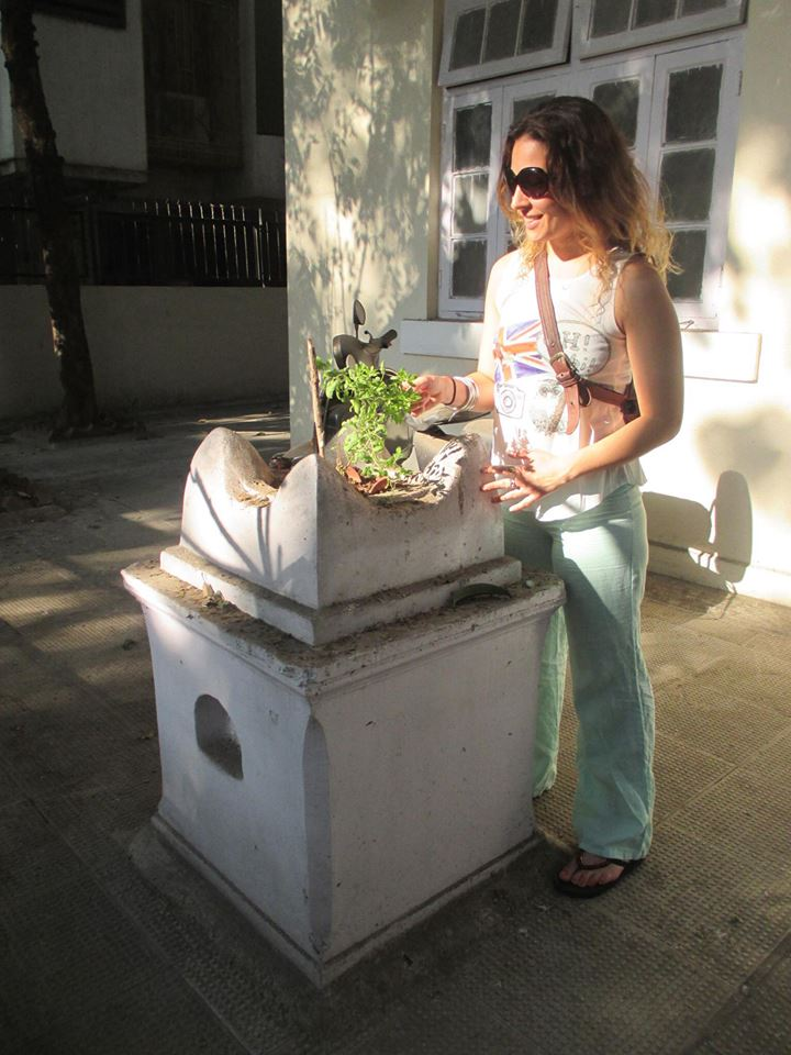 So excited to find my first Holy Basil plant being honored outside of a home in Mumbai, India.