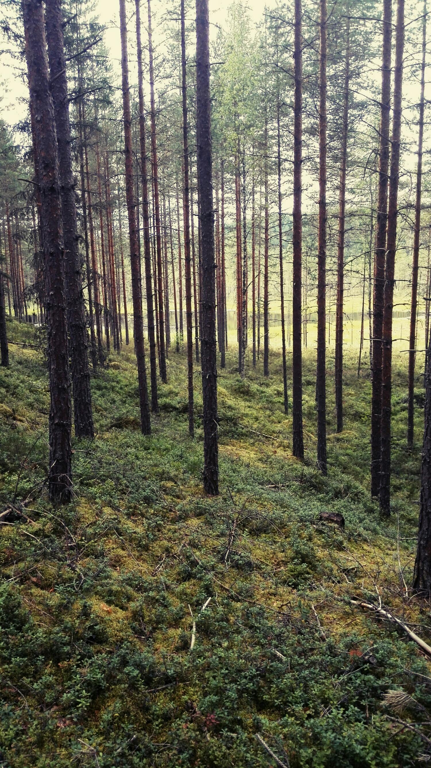 Muistan vieläkin sen tunteen kun tajusin paikan luonnonrikkauden ja monipuolisuuden. Kuvassa läheinen metsä, jonne juoksin alussa paljon silloin kun kaipasin olla yksin Jumalan kanssa.