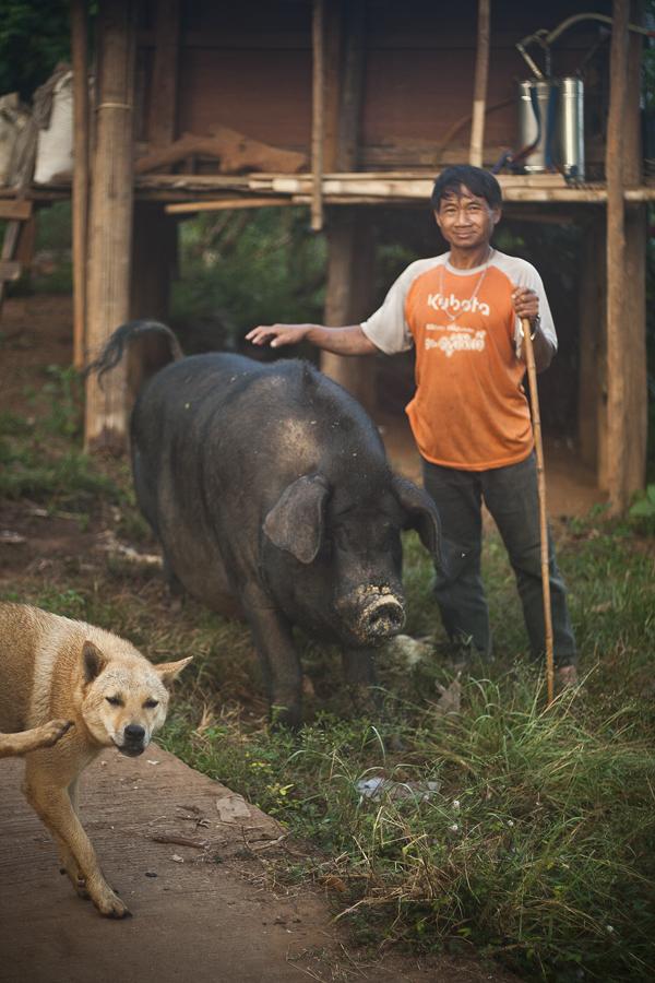 Järkyttävän kokoinen sika