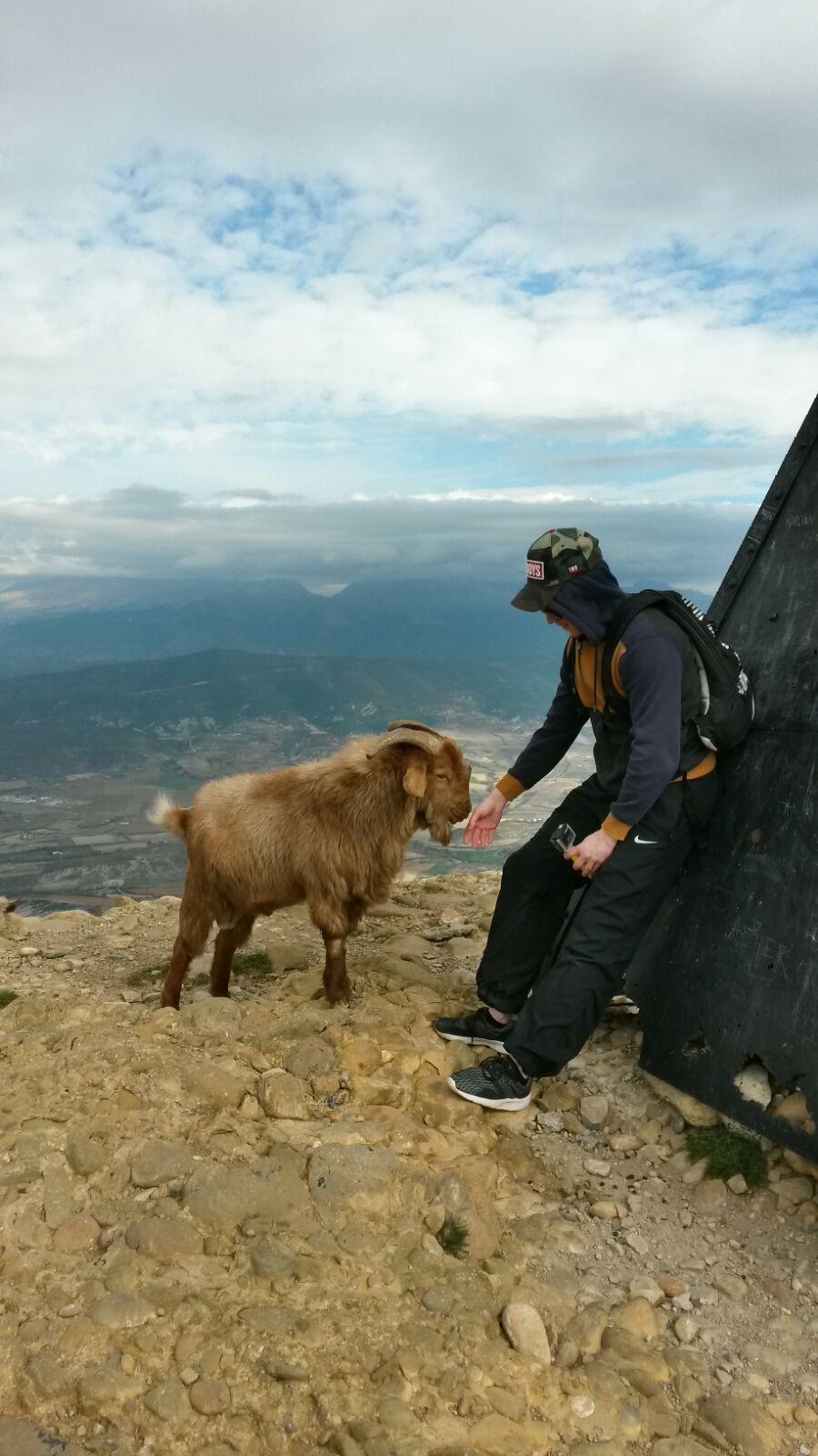 Ylhäällä vuoren laella meitä oli tervehtimässä pari karvaista kaveria.