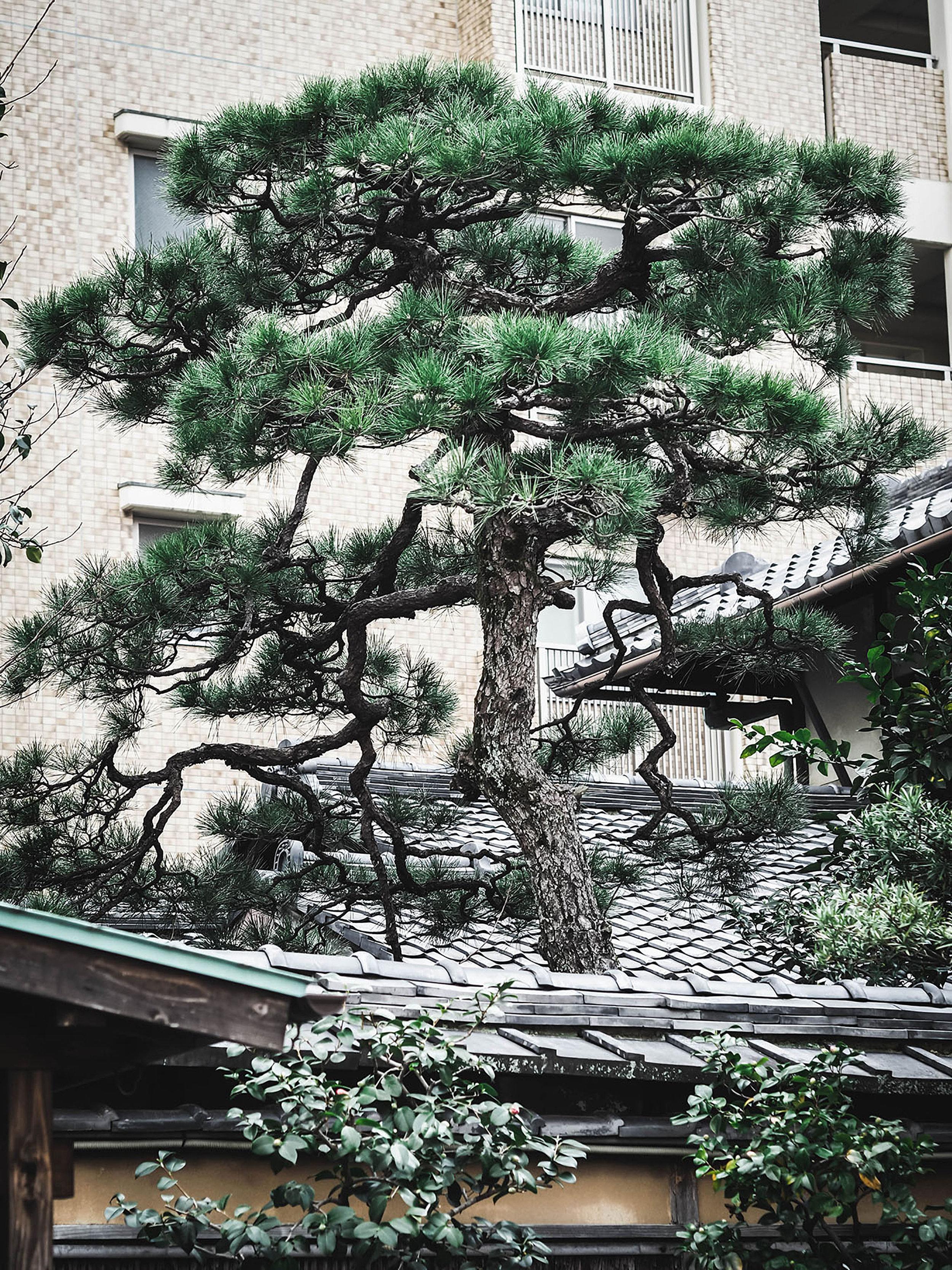 Kyoto+3.jpg