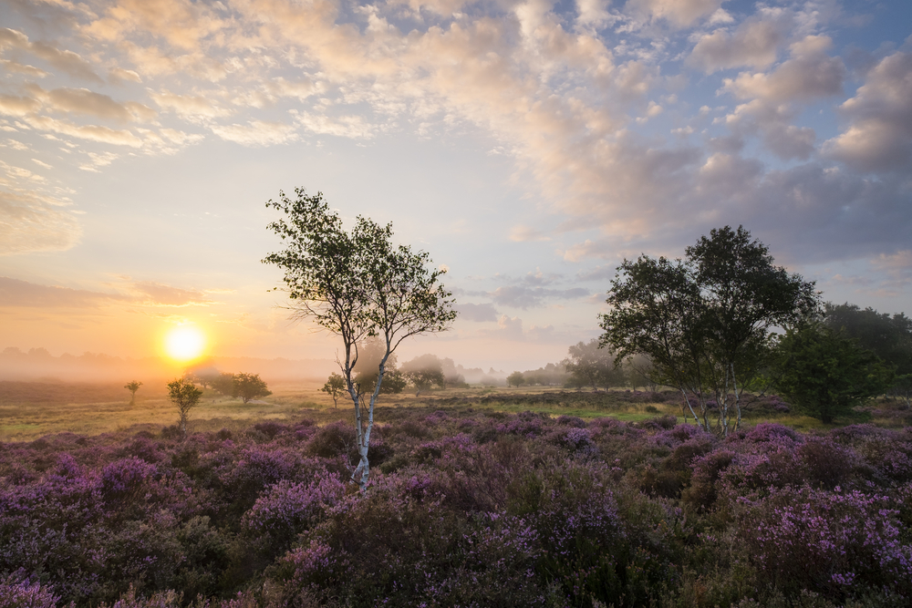 Westleton Heath at sunrise  (Richard Bowden/Shutterstock)
