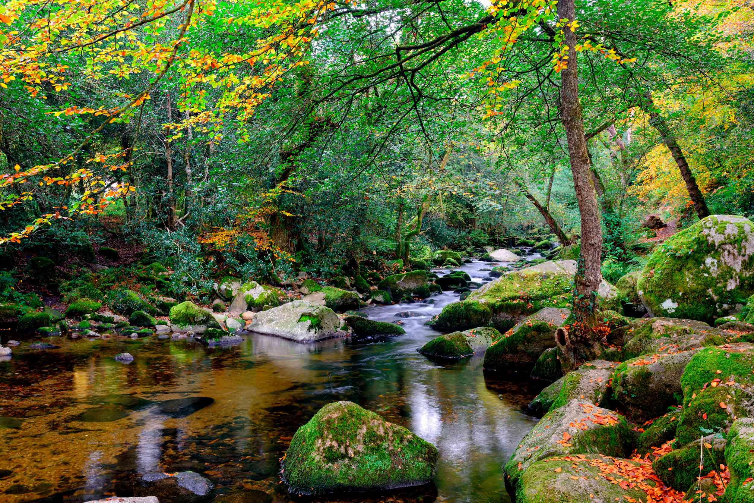 River Plym woodland  (Helen Hotson/Shutterstock)