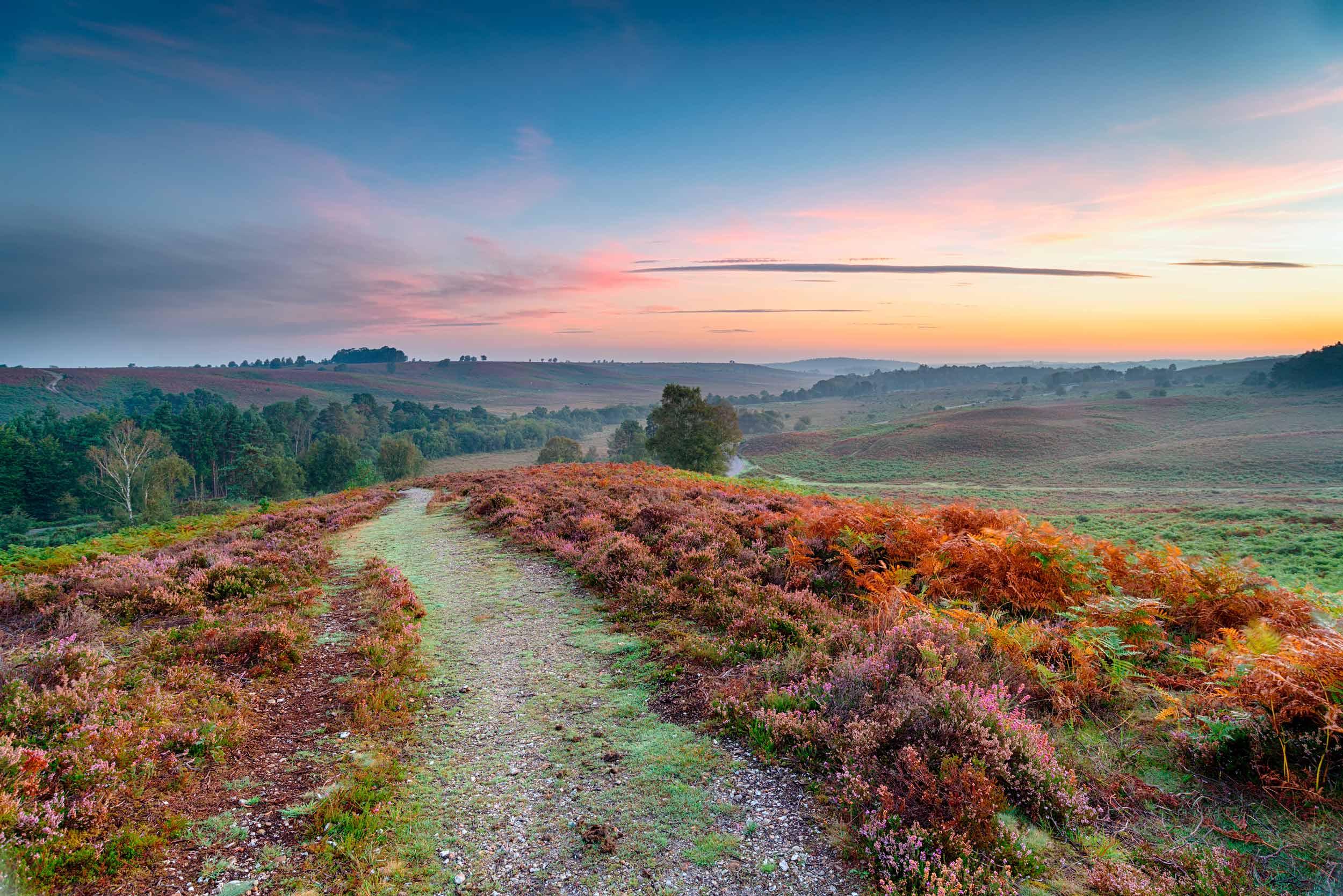 Rockford Common, New Forest, England  (Helen Hotson/Shutterstock)
