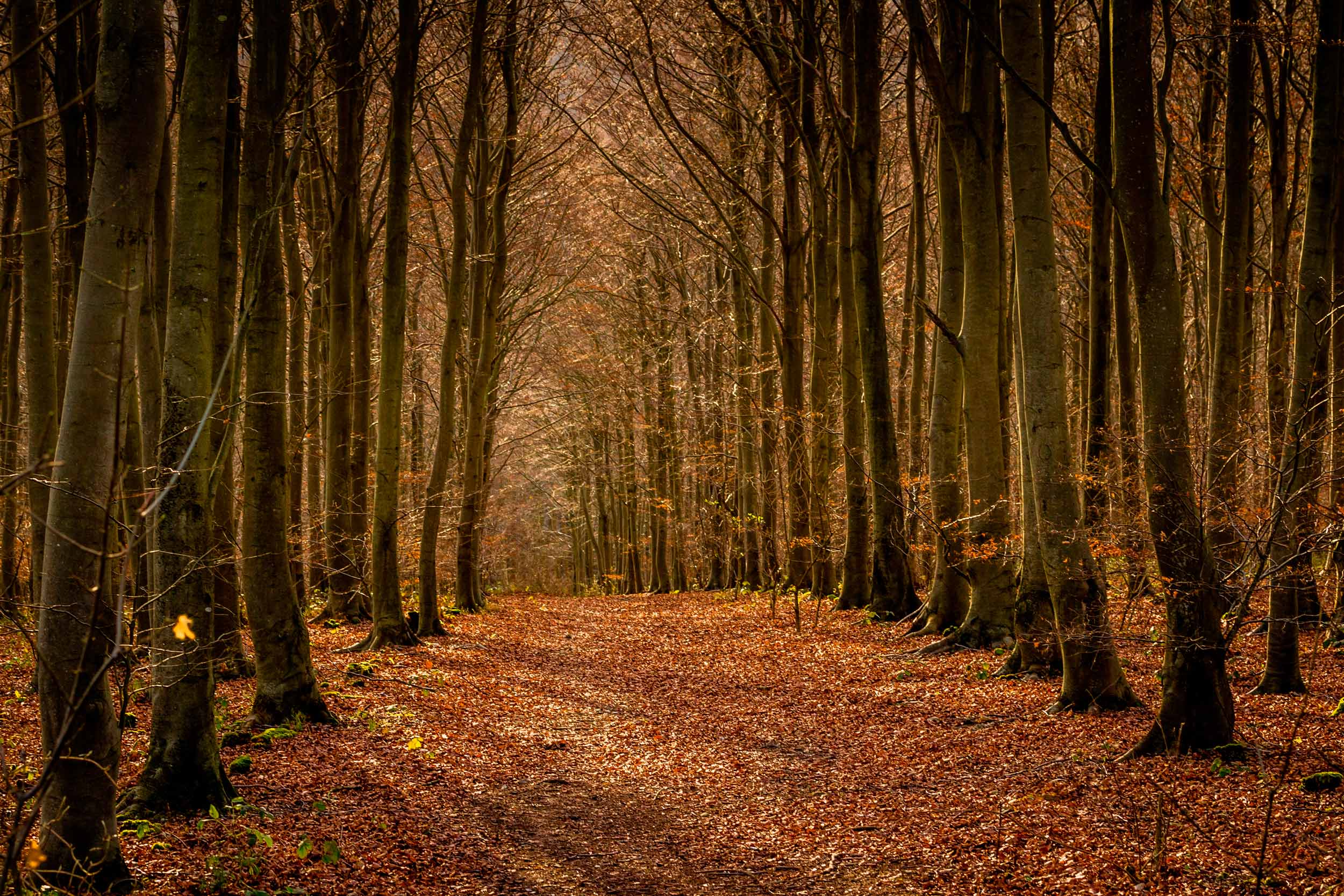 Friston Forest, South Downs  (Louise Bottomley/Shutterstock)