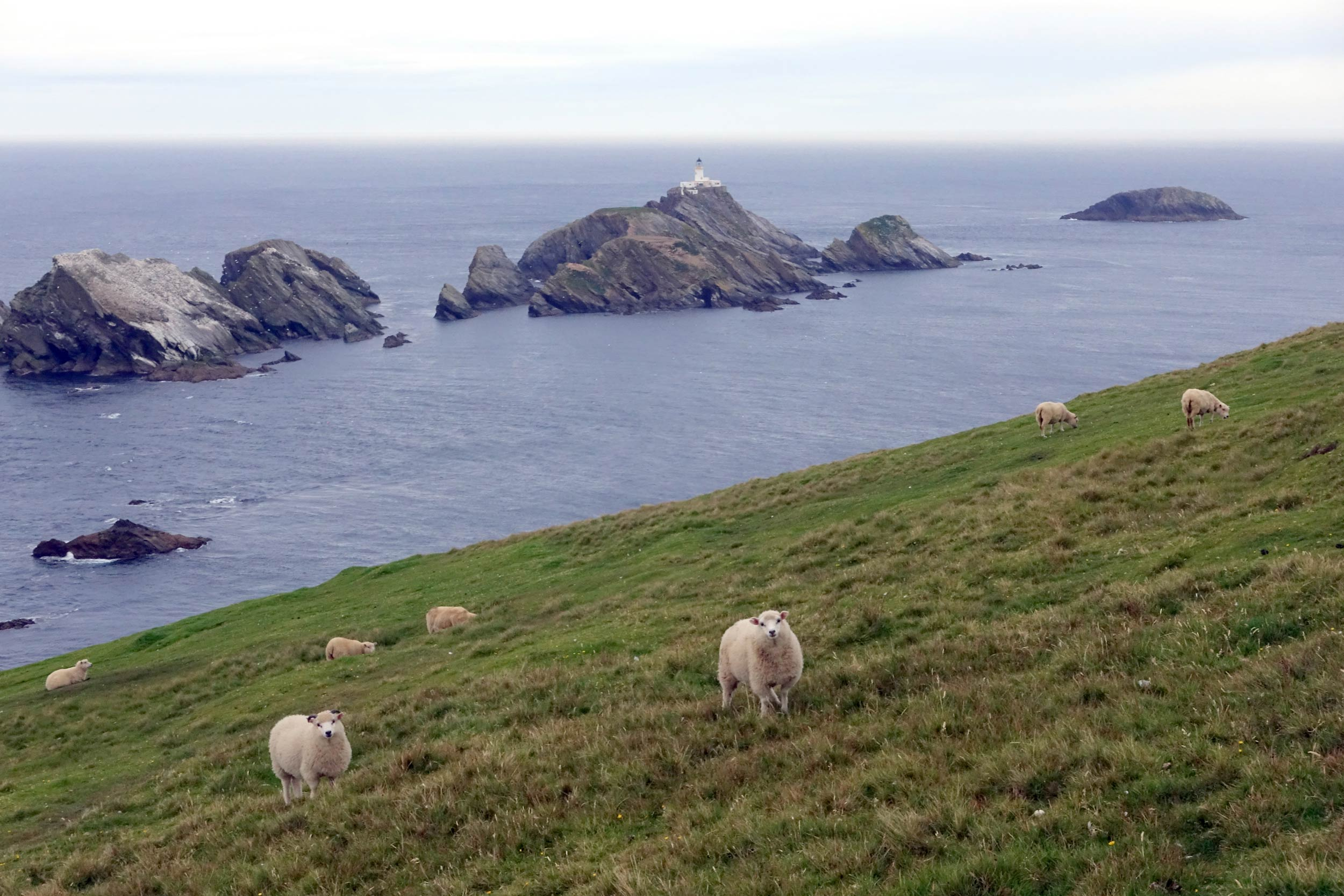 The very northern end of Britain - some sheep, Muckle Flugga lighthouse and, beyond, Out Stack  (Humphrey Butler/Marvellous Maps)