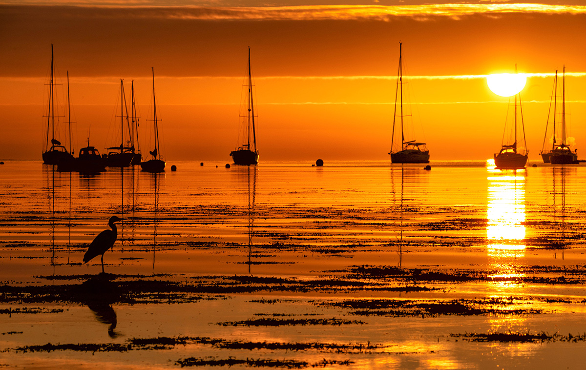 Heron Sunrise  (Kirstie Smith / afocusforadventure.co.uk)