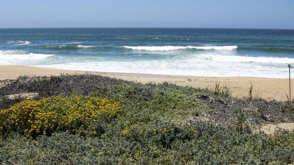 bwr-moss-landing-beach.jpg