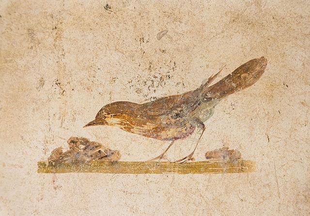 Ancient Roman fresco of a bird from the Villa of Poppaea,Oplontis, Italy, ca. 70 CE ( Wikimedia Commons ).