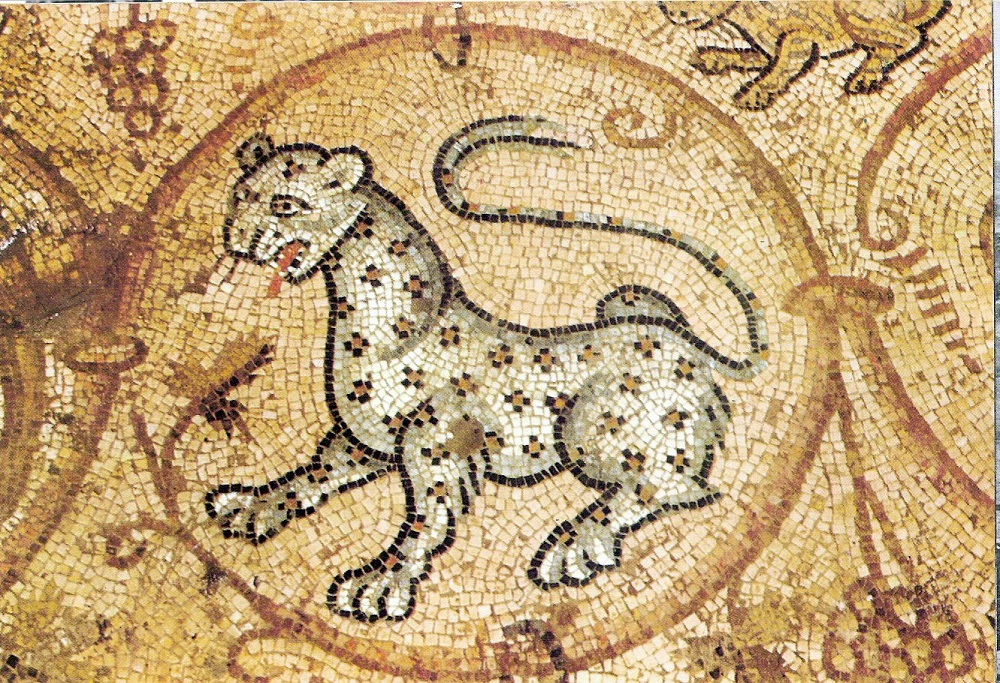 Detail of a leopard from late antique synagogue mosaic | C4-6CE, restored at Maon-Nirim in the Negev |  Image Source