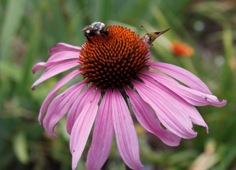 pollinator crop.jpg