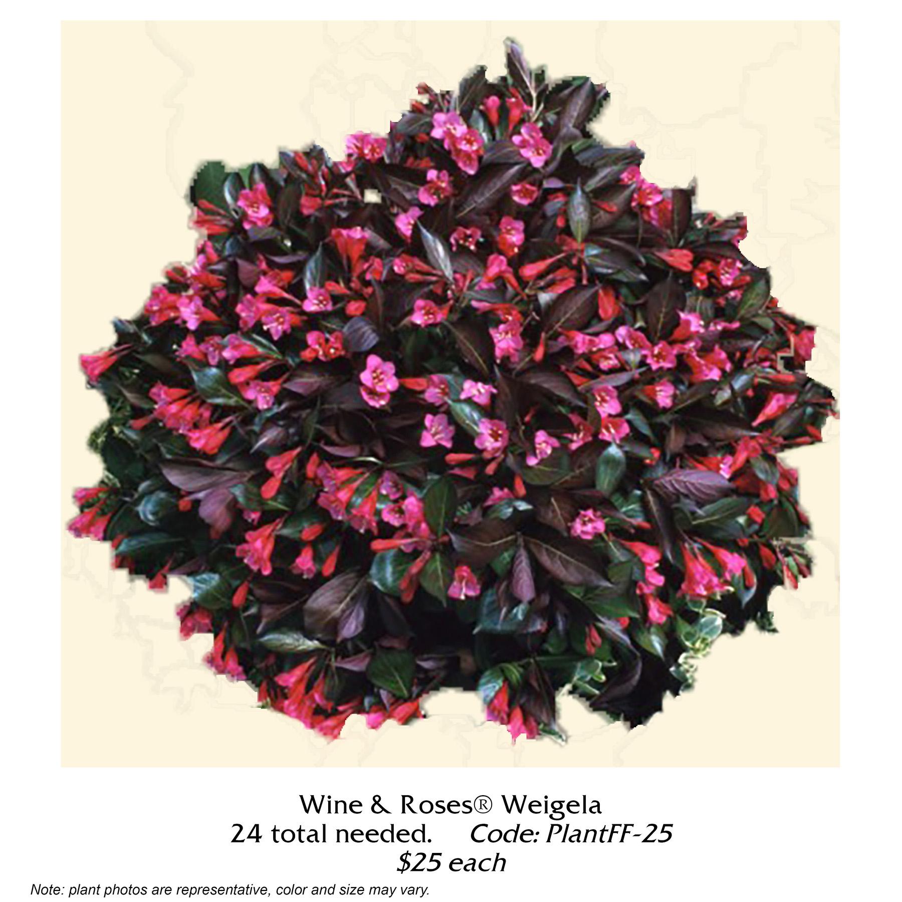 wine and roses weigela.jpg