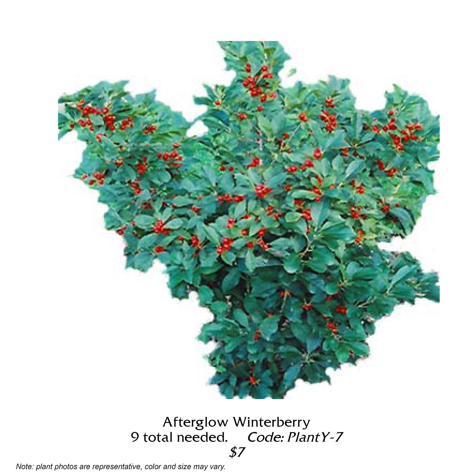 afterglow winterberry.jpg