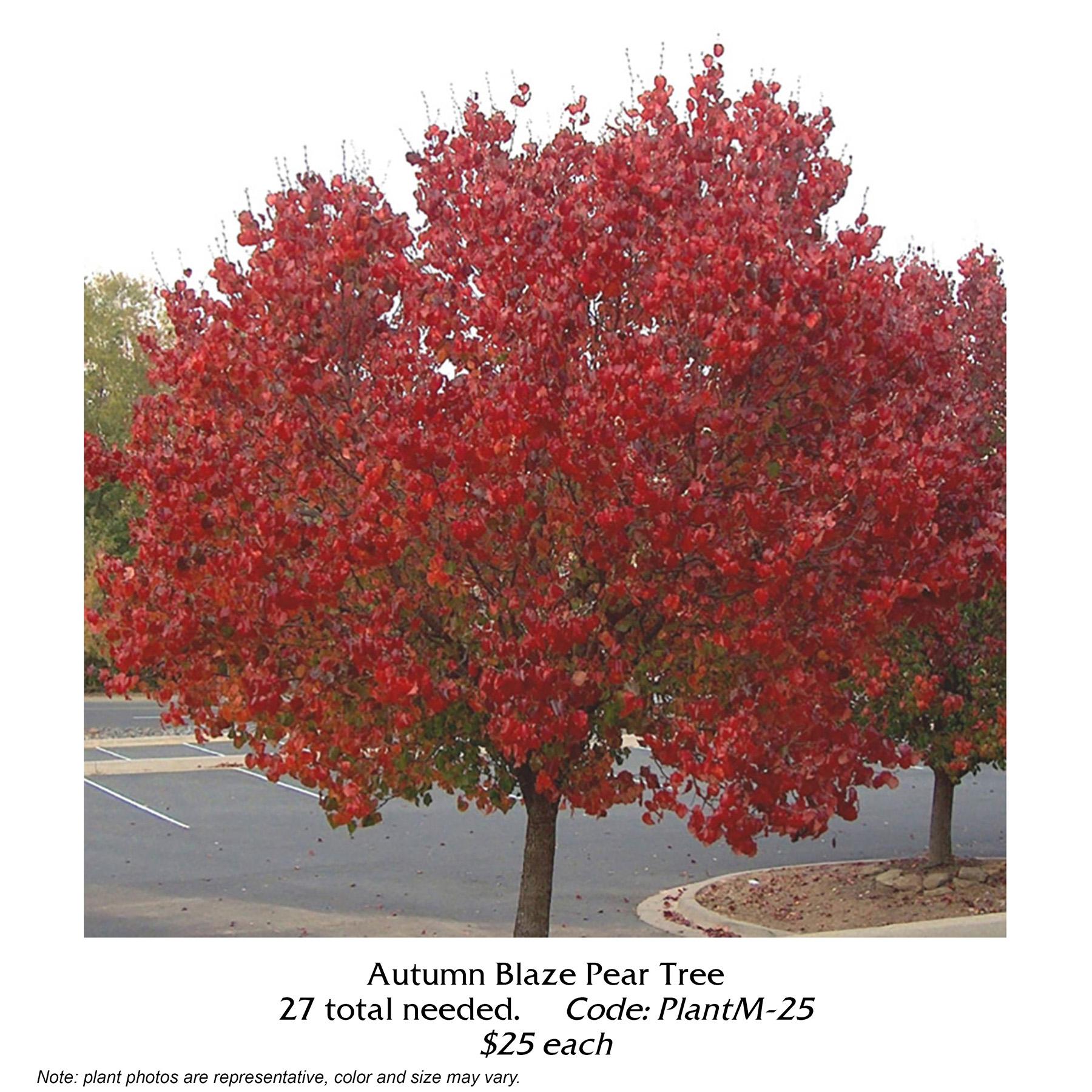 Autumn Blaze Pear.jpg