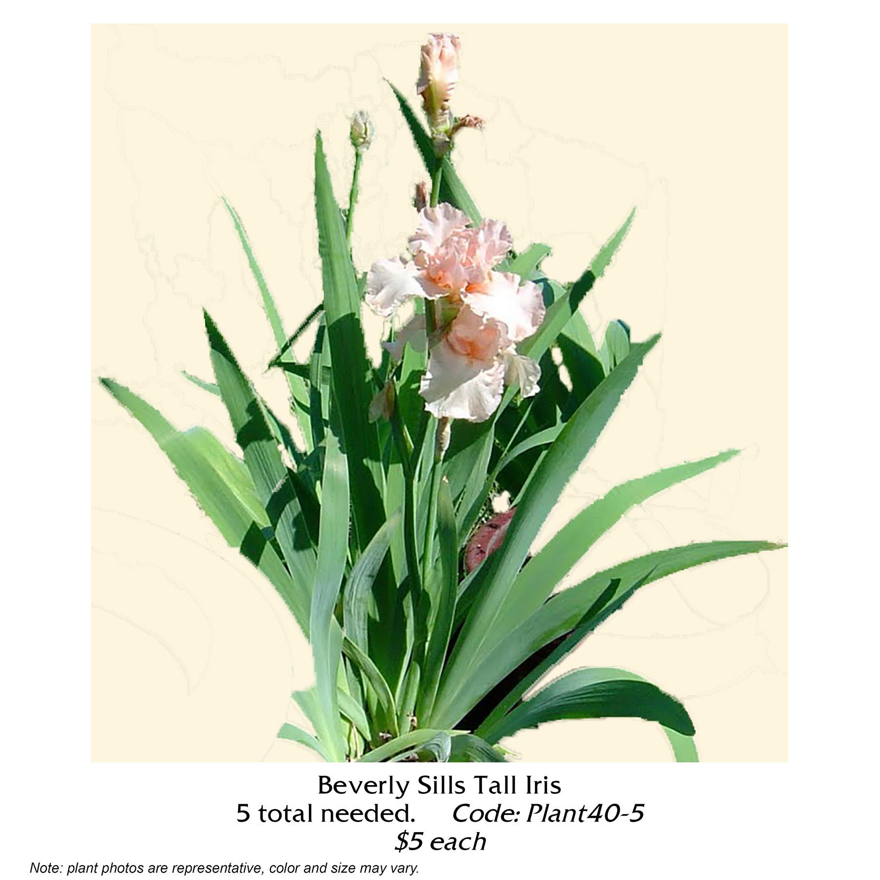 Beverly Sills Tall Iris.jpg