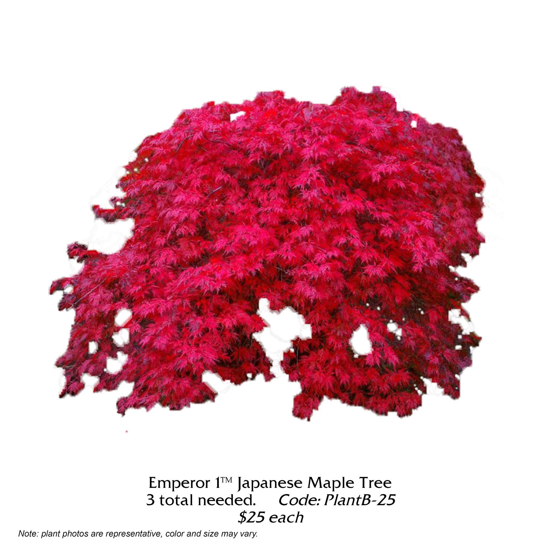 Emperor Japanese Maple.jpg