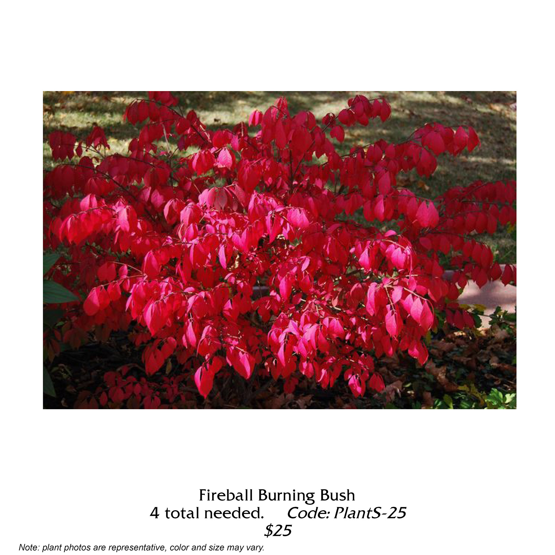 Fireball burning bush.jpg