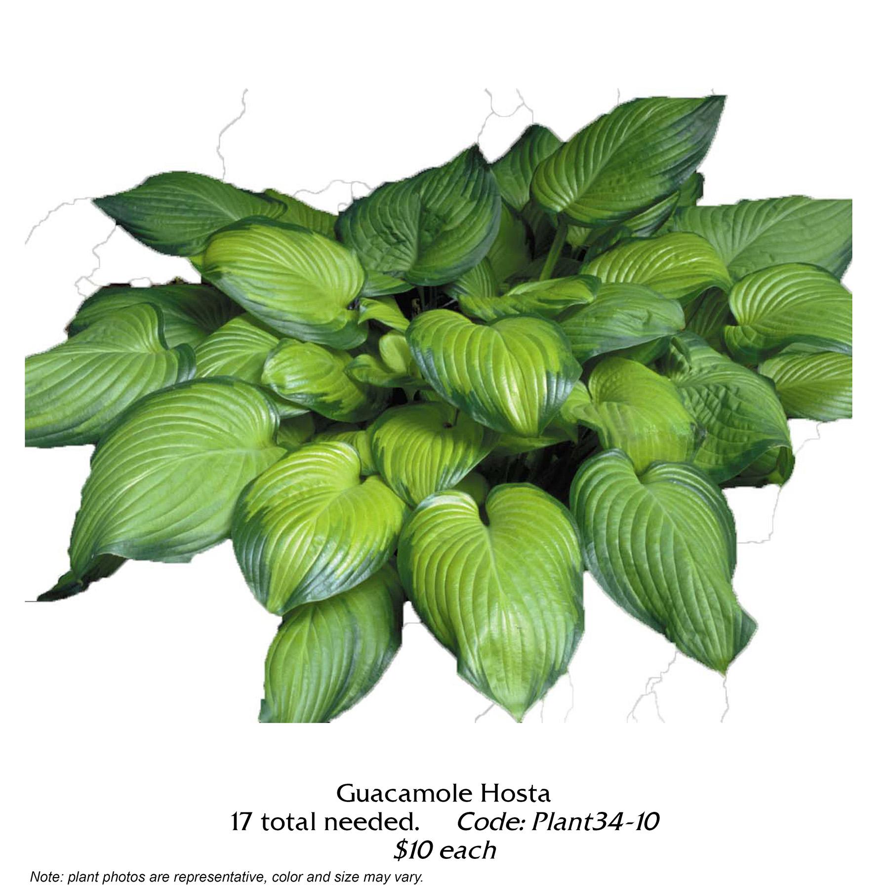 Guacamole Hosta.jpg