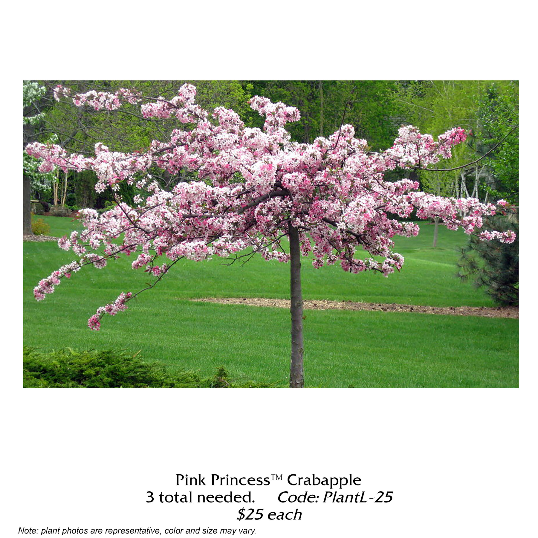 Pink princess crabapple tree.jpg