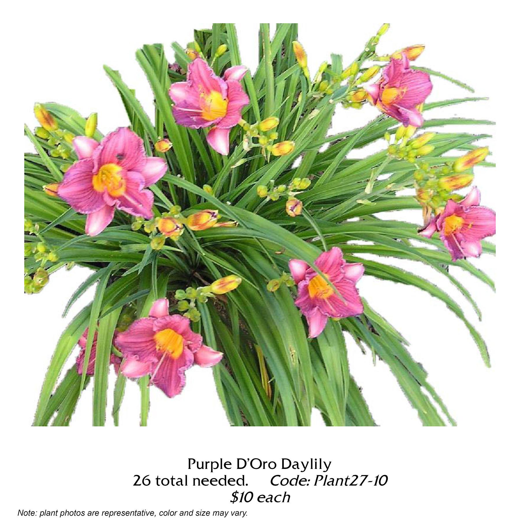 Purple de Oro daylily.jpg