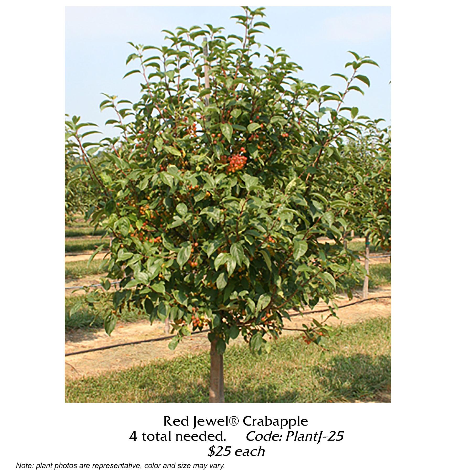 red jewel crabapple tree.jpg