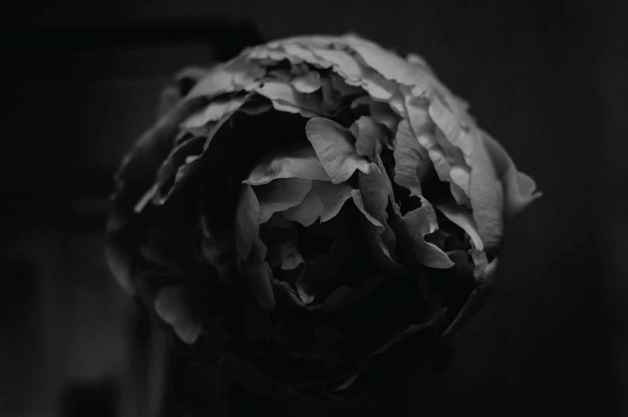 peony, flower photography, flowers, black and white, black and white flowers, peonies
