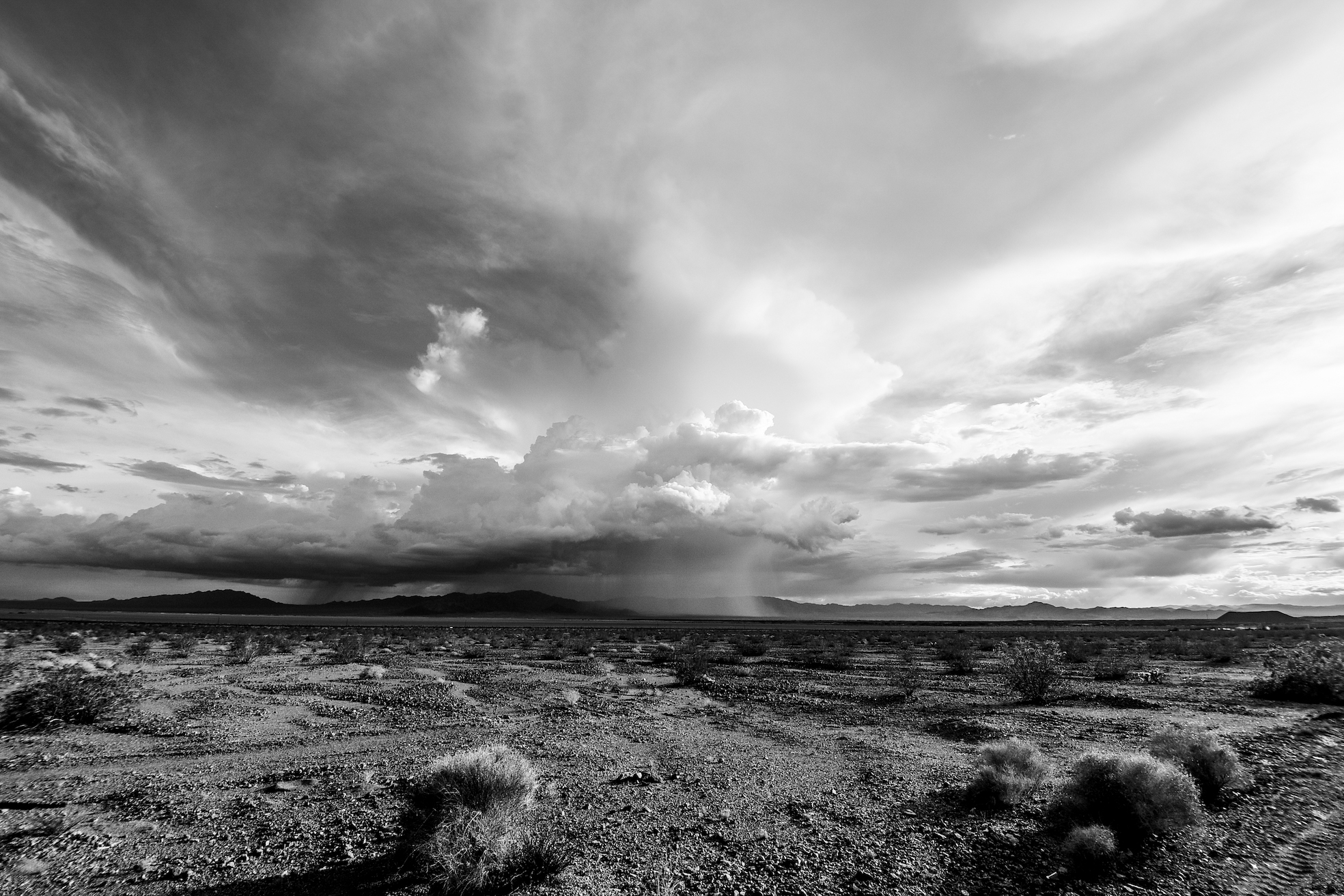 joshua tree, black and white joshua tree, palm desert, mojave desert, desert storm, ashley marie myers