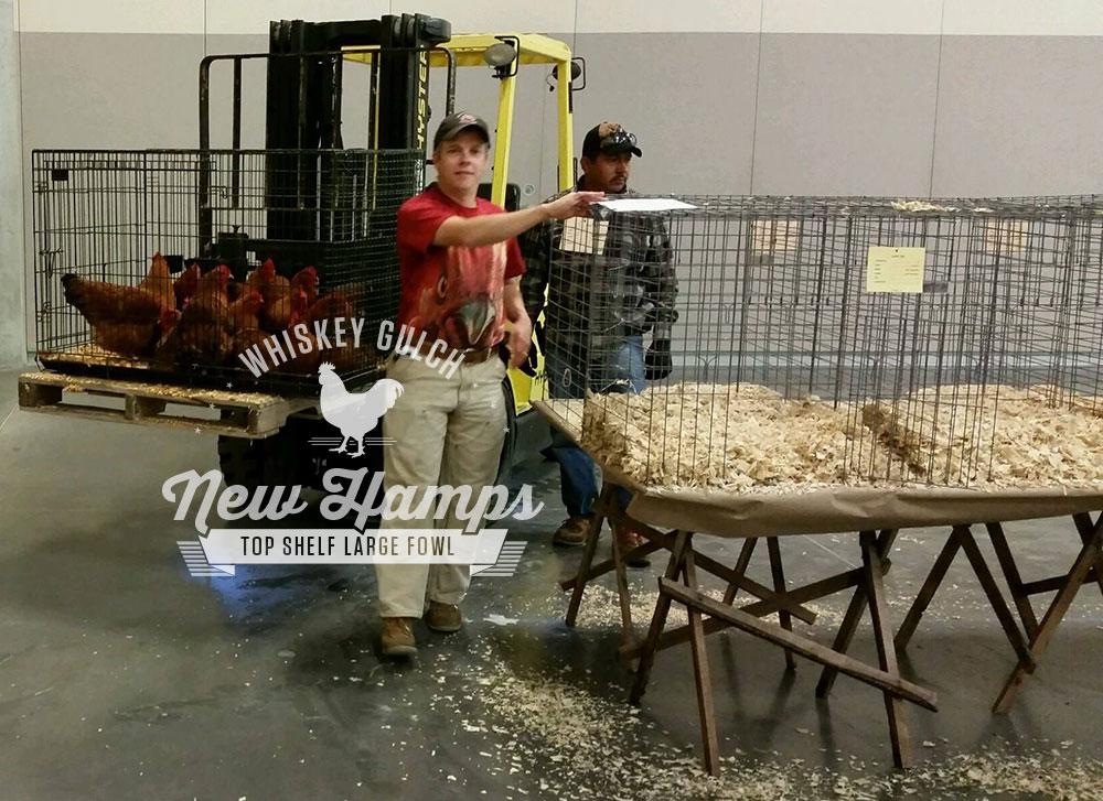 new-hamp-chicken-poultry-show-2014-mike-omeg-01.jpg