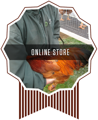 Whiskey Gulch New Hamp Chickens Online Store